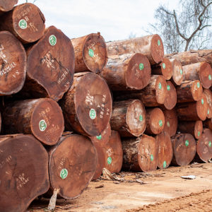 Stacking logs ready for export from West Africa forestry industry